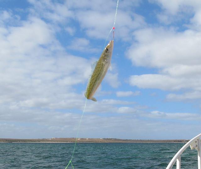 Streaky Bay fishing trip