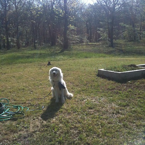 Shiloh, my gardening companion