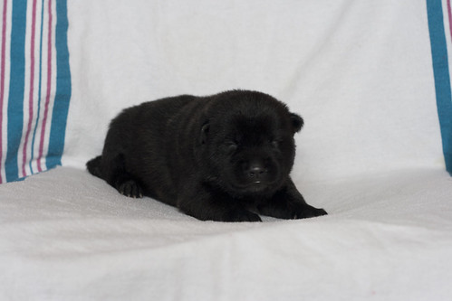Kumi-Fall2011-Day12-Puppy1-Female-c