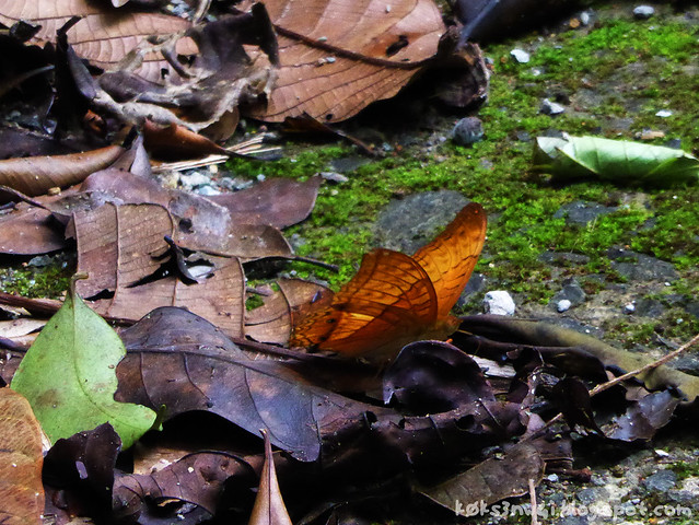 Mount Serapi Butterfly 2
