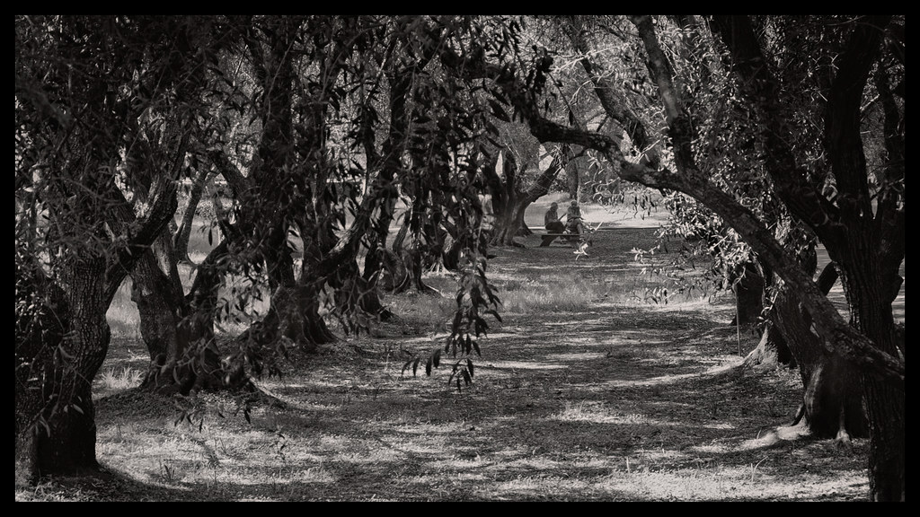 In the Grove - Filoli - 2014