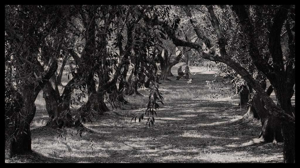 In the Grove - Filoli - 2014