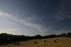 meadows and the big blue sky
