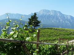 Trentino: vinařství Moser a Giro d´Italia