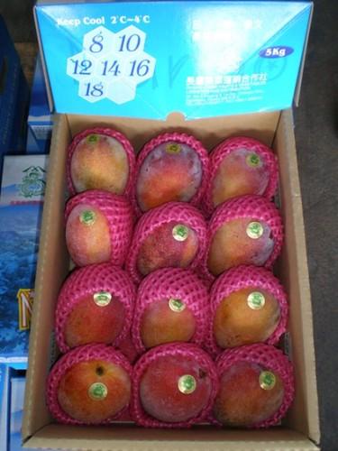 芒果出口包裝 愛文芒果