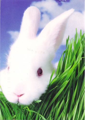 White Bunny Rabbit