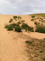 field(0.0), plain(0.0), plateau(0.0), dune(0.0), wadi(0.0), badlands(0.0), savanna(0.0), grassland(0.0), prairie(1.0), steppe(1.0), erg(1.0), soil(1.0), sand(1.0), aeolian landform(1.0), natural environment(1.0), desert(1.0), landscape(1.0),