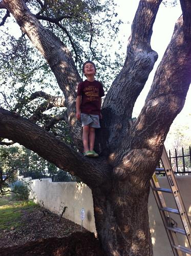 Ezra got up in the tree