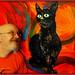 Avec un nouveau tableau sur le chat noir_1