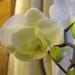 2012-03 orkideak-7