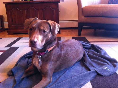 Subaru Dog Blanket Klout Perk