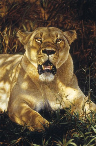 'Lioness in Shade' oil on board