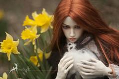 DS Bernard -Duran- Daffodils 11