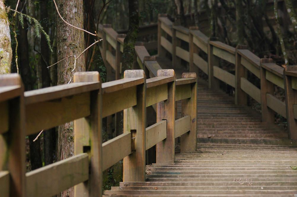觀霧巨木步道-063