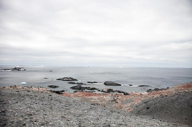 antarctica-blog-31