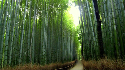 Bamboo Forest of Arashiyama, Kyoto 京都嵐山の竹林