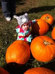 Getting pumpkins