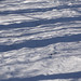 Small photo of Shadow stripes