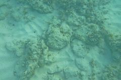 Small reef