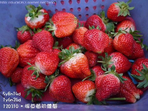 P1180101莓