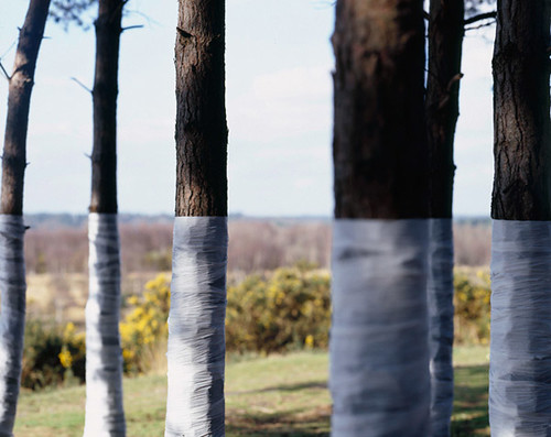 Zander Olsen_Tree, Line_008