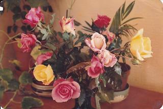Garden roses, Oct 1984