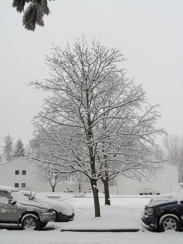 leap_day_snow_Feb29_2012