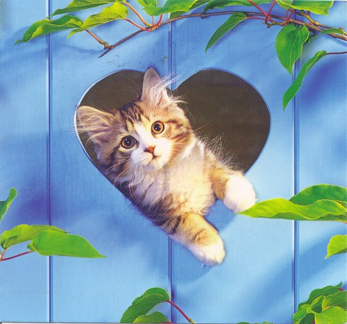 Kitten in Blue Fence