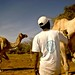 Livestock protection in Darfur - Sudan