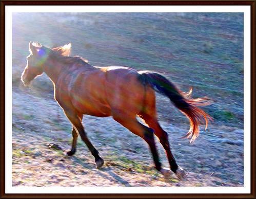 Kép 024-1 /  Run towards the light and freedom!