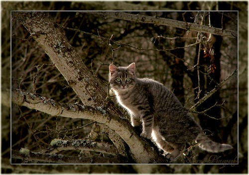 Kitty in the Tree by Enjoy the journey...Not the Destination~