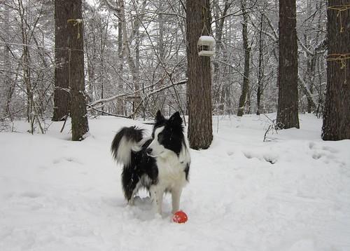 雪降る庭のランディ 2012年3月9日16:05 by Poran111