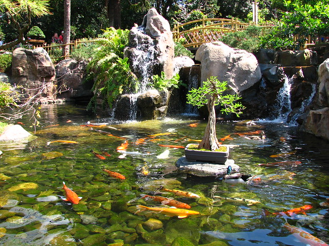 Epcot japan koi pond flickr photo sharing for Japan koi fish pond