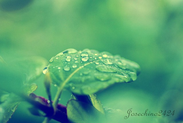 LLueve sobre verde