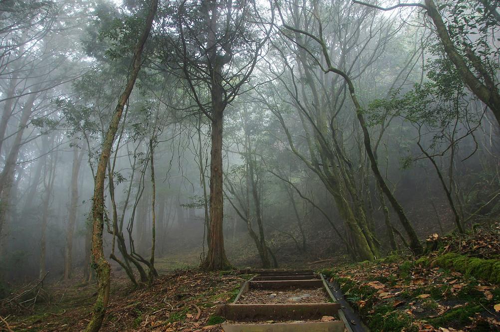 觀霧巨木步道-061