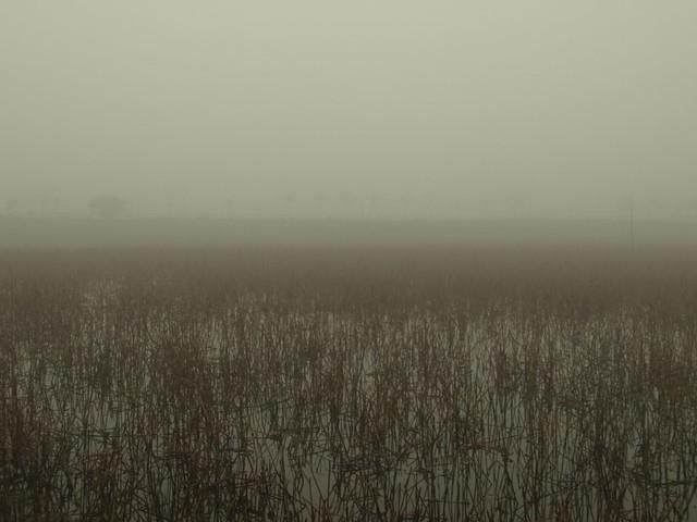 Foggy Hanoi
