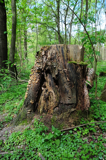 Wald bei Hackenbroich