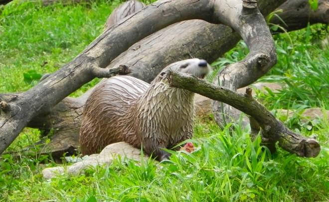04-07-2012_River Otter