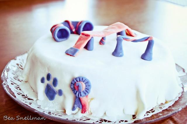 Dog Agility Cake Decorations : Agility cake Flickr - Photo Sharing!