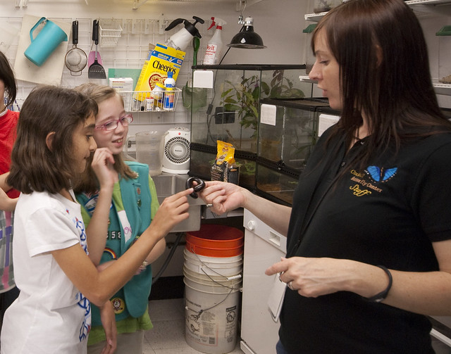 Girl Scouts - Careers In Science