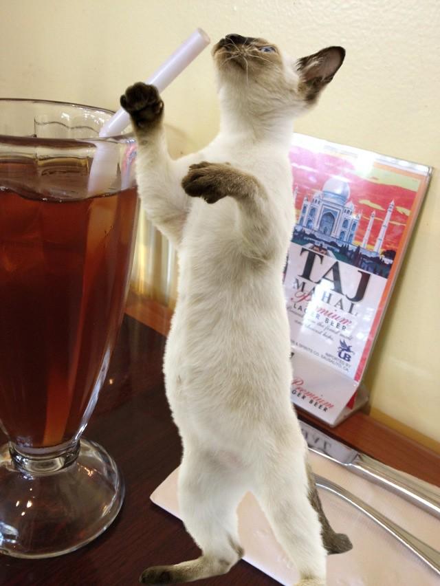 Cat Lover's Camera app