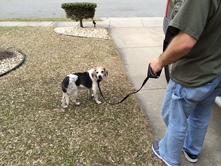 Safespot Locking Leash product review