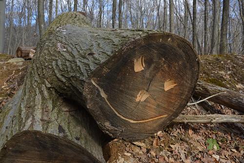 He's a lumberjack, and he's okay