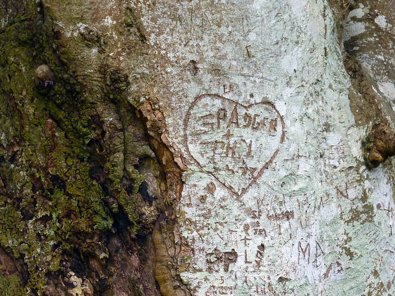 tree-carving