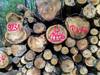 Buntes Holz