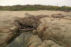 Driftwood boneyard/Carmel River Beach/Carmel Meadows