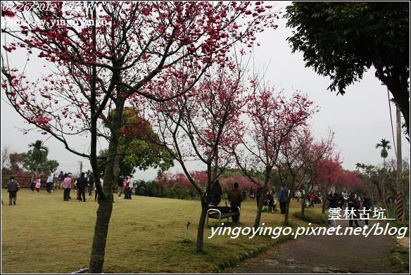 雲林古坑_古坑櫻花20120226_I2764