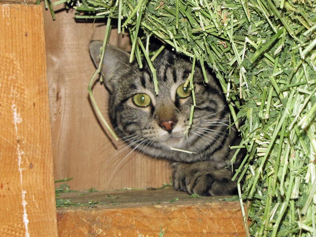 Peek-A-Boo`