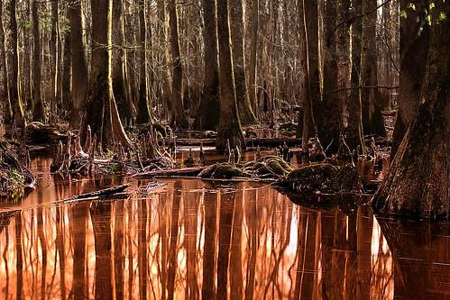 park river south national swamp copper carolina congaree