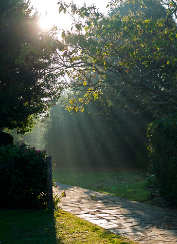 park autumn trees light sun grass leaves sunrise path panasonic eastbourne g1 bushes shafts beams shiningthrough